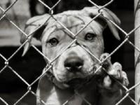 Adozione cani del Comune di Fiano Romano custoditi presso canile rifugio
