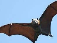 3 reasons why we should love bats
