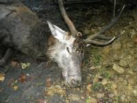 """Fiano Romano inaugura parco giochi per bambini dedicandolo ai cacciatori. Animalisti """"Scelta diseducativa"""""""