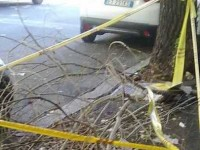 Rieti, breve ma forte temporale in Bassa Sabina: alberi e rami caduti