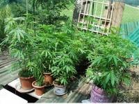 Poggio Moiano, coltivavano marijuana in casa. Arrestata coppia di maturi reatini