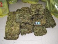 Fiano Romano. Sequestrato mezzo quintale di marijuana in un deposito