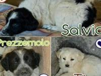 I cuccioli abbandonati a Sant'Oreste ancora cercano casa, sono una femmina e due maschietti