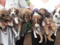 Emergenza cuccioli con gastroenterite. Bisogna aiutare i volontari della Sabina
