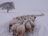 Neve e sisma: le frazioni isolate. Ventunomila utenze ancora bloccate