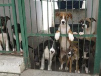 Vicenda cani di Fara Sabina trasferiti a Matera, alcune associazioni si oppongono