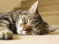 Civitanova, sparano a un gatto, sopravvive con 64 piombini