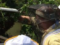 apicoltori_rignano