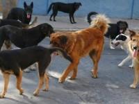 Fara Sabina. Basilicata: nessuna deportazione dei cani