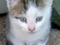 Sabina, sei bellissimi gattini cercano casa