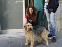 Genova, 16 cani uccisi dalle esche: ora scattano le ronde