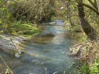 """""""Disastro ambientale nel fiume Farfa"""": parte la denuncia"""