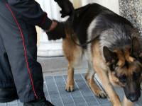 Poggio Mirteto, blitz dei carabinieri a scuola: spunta la marijuana