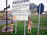 """Due lupi uccisi e impiccati a Radicofani (Si), il sindaco: """"Assalto alle greggi è un problema"""""""