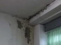 Muffa, umidità, bagni e caldaie rotti al liceo Rocci: lo sdegno corre sul web e non solo