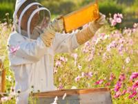Nazzano (RM). Corso per apicoltori