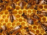 Dal 9 febbraio 2018 corso di apicoltura di II livello nella Riserva Tevere Farfa di Nazzano (RM)