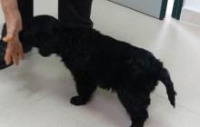 Cucciolo di 3 mesi trovato a Tevere Farfa. Qualcuno lo riconosce?