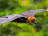 Bat night. Ma che bello il pipistrello! a Sant'Oreste l'8 settembre 2018