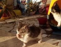 gattini_passo_corese_04