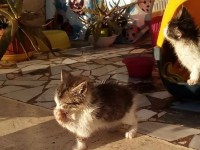 Passo Corese, trovate tre gattine abbandonate. Ora per loro si cerca adozione