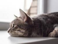 Coronavirus e animali domestici: possono ammalarsi ma non hanno un ruolo nella diffusione
