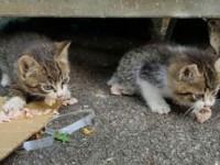 Gattini in strada a Poggio Mirteto. Cercano casa