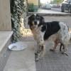 10/04/2014 Avvistamento! zona Fara in Sabina (RIETI) cucciolo in strada!