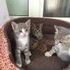 Regalo gattini a Fiano Romano