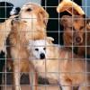 Cani abbandonati a Fara pronti per essere adottati